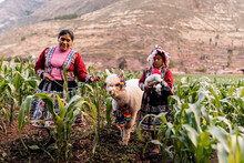 Peruvian Mother With Her Daughter And An Alpaca