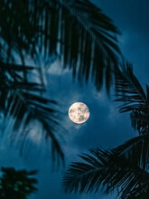 Silhouette Of Palm Trees During The Full Moon