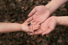 Big Hands & Tiny Frogs