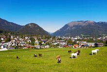 Herd Of Horse Grazing On Meadow By Town Against Blue Sky During Sunny Day, Salzkammergut, Austria