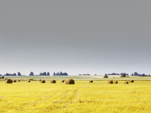 Yellow Mown Field Under Gray Sky - Rural Landscape