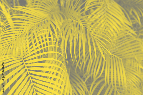 trendy-design-nature-and-background-concept-close-up-of-ultra-violet-palm-tree-leaves