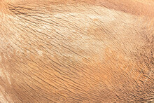 Elephant Skin Texture Abstract Background