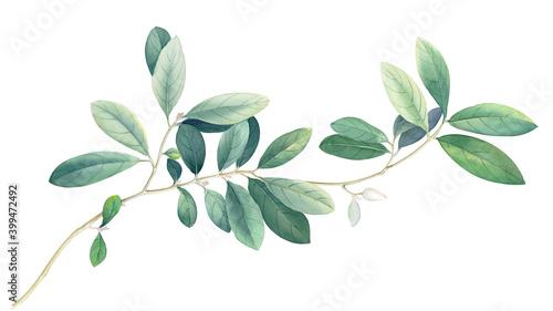 Stampa su Tela Flowers watercolor illustration