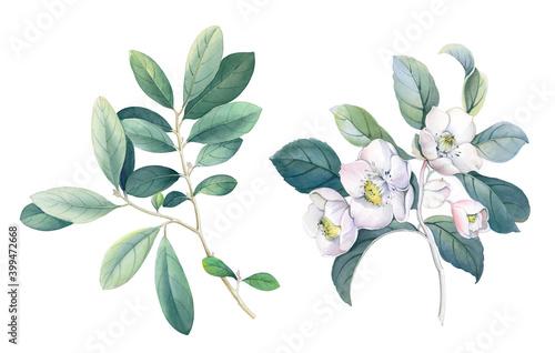 Fototapeta Flowers watercolor illustration