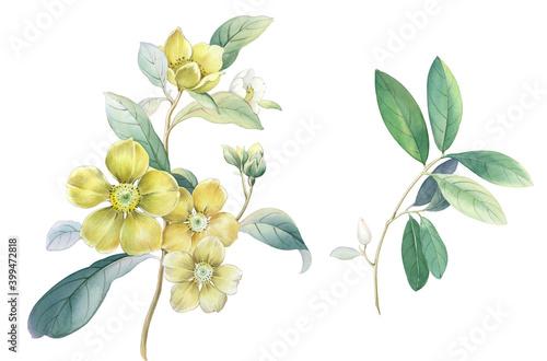 Canvas Print Flowers watercolor illustration