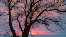 Silhouette Of Barren Lone Tree With Amazing Sunset Sky