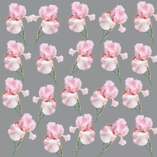 Seamless Pattern: Large Pink Irises Scattered On A Gray Background