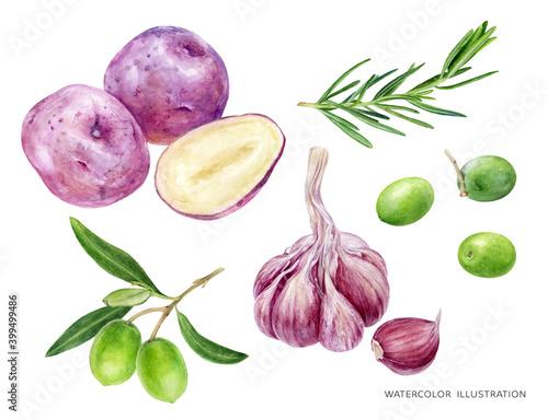 Fototapeta Potato rosemary garlic olives food set watercolor illustration isolated on white background obraz