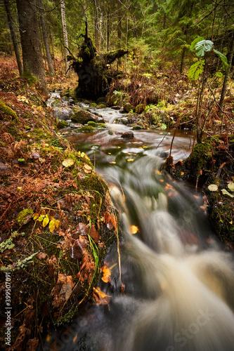 Fotografia small creek in autumn forest