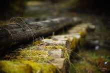 Close Up View Of Wooden Mossy Log Bridge, Deeply In The Forest, Old Mysterious Structure, Non Urban Scene