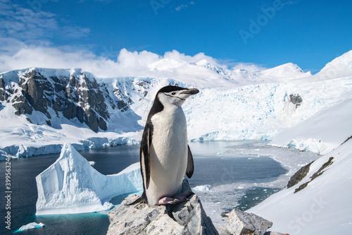 Carta da parati cute penguins