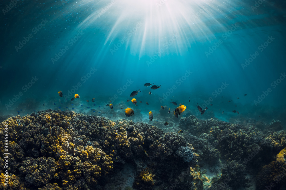 Fototapeta Underwater view with corals, tropical fish and sun rays in ocean