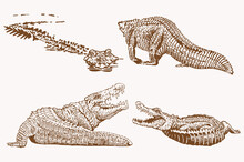 Graphical Vintage Set Of Crocodiles , Sepia Background