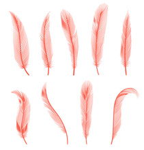 Coral Detailed Feathers Of Bird Collection. Vector Decorative Fluffy Pink Feathers Of Flamingo Or Goose. Set Plume Icon Isolated On White Background