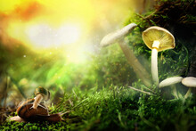 Fantasy World. Mushrooms And Snails With Magic Lights In Enchanted Forest