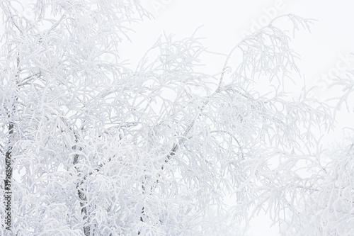 Canvas Snow and rime ice on the branches of bushes
