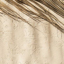 Dry Palm Foliage Leaf Branch On Concrete Wall. Warm Sunlight Shadows On The Wall.