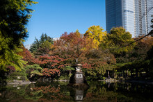 Chiyoda, Tokyo / Japan - November 14 2020: View Of Mirror-like Kumogata-ike Pond At Hibiya Park With Maple And Ginkgo Trees' Lush Foliage Changing Colors From Green To Red And Yellow At Hibiya Park.