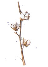 Beautiful White Cotton Branch Isolated On The White Background With Violet Dots. Natural Eco Drawing For A Flower Shop, Invitation, Party, Textile.
