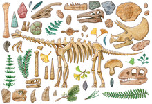 Dinosaur Skeleton, Skull And Items Illustration By Watercolor With Working Path