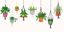 Scandinavian Macrame Plant. Boho Home Interior Decor. Isolated On White Background. Vector Hand Drawn Illustration.
