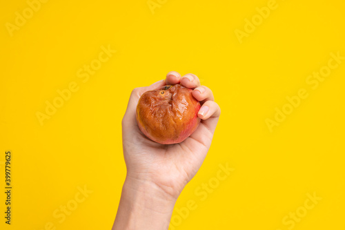 Fotografie, Obraz A female hand holds a rotten apple with a worm on a yellow background