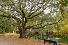 Park Bench Under Beautiful Tree Near River With Bridge
