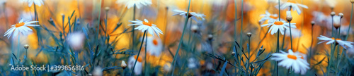 Fotografia Spring blossom background