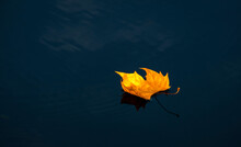 Folha De Outono Sob A água