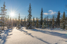 Stunning Sunny Day In The Middle Of The Wilderness, Woods, Forest In Northern Canada With Snow Covered Trees, Blue Sky And Bright Sun.