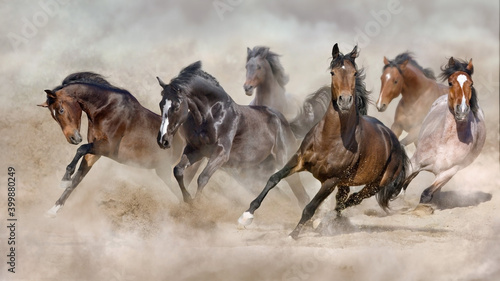 Fototapeta Horse herd  galloping on sandy dust against sky obraz