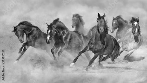 Fototapeta herd of horses in the desert