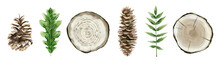 Forest Botanical Elements For Decoration. Summer Tree Decor. Pinecones, Tree Cuts, Oak And Rowan Leaves. Watercolour Isolated Illustration On White.