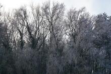 Frozen Nature, 8th December 2020, Suffolk, Haverhill Area In UK. Frost On Plants, Fields, Minus 3 Degrees