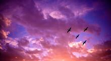 Pelicans Sunset Sk