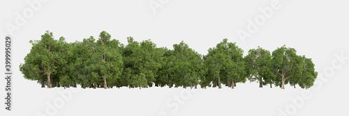 Fototapeta Forest isolated