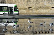 Tramway De Nantes Avec Mouettes Rieuses. France