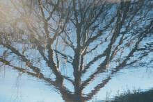 Reflejo Abstracto Y Distorsionado De árbol Sin Hojas En El Agua. Textura De Naturaleza