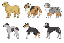 Cute Cartoon Dog Breed Set Vector Clipart. Pedigree Kennel Rough Collie, Golden Retriever For Dog Lovers. Purebred Greyhound Smooth Collie And Borzoi Illustration. Isolated Hunting Hound.