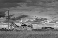 Barn In The Countryside. Abandoned Creepy Farm Shacks Falling Down In An Overgrown Field. Spooky Deserted Buildings On Rural Alberta Farmland Worn And Rotting