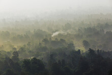 Trees In Dense Forest In Valley With Fog And Mist With Smoke Coming From Burning Of Trees