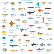 Large Collection Of Fishes Of The World. Cartoon Style Vector Icons
