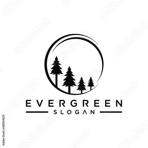 Fotografia pine evergreen fir hemlock spruce conifer cedar coniferous cypress larch pinus t