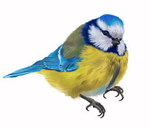 Digital Set With Colorful Blue Tit Forest Bird. White Background.