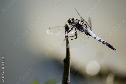 Photo Una Libellula appoggiata su di un ramo vicino ad corso d'acqua