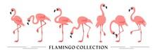 Flamingo Collection - Vector Illustration
