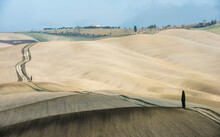 Italy, Tuscany, San Quirico D'orcia, Long Twisting Rural Road Leading Through Endless Fields And Lonely Cypress Tree