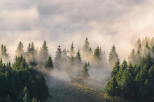 Ukraine, Zakarpattia Region, Rakhiv District, Carpathians, Chornohora, Fog Over Forest On Mountain Petros