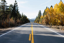 USA, California, Eastern Sierras, Route 88, Empty Road Among Trees